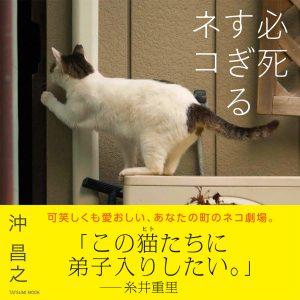 沖昌之「必死すぎるネコ」写真展